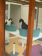 Sylvester's Family Cattery Chalet
