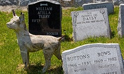 Article on Pet Funeral Rip Offs