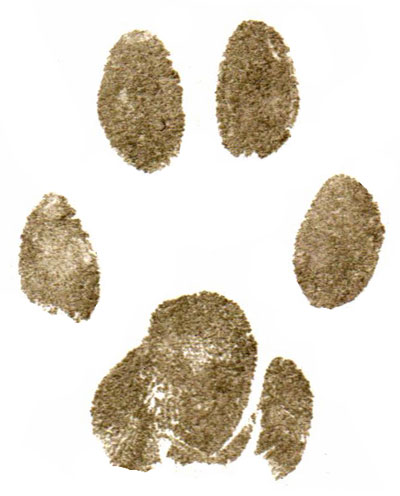 Paper paw prints and clay paw impressions for pets before