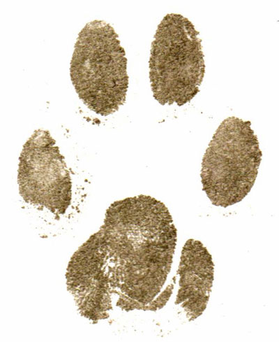 Paper paw print from cat