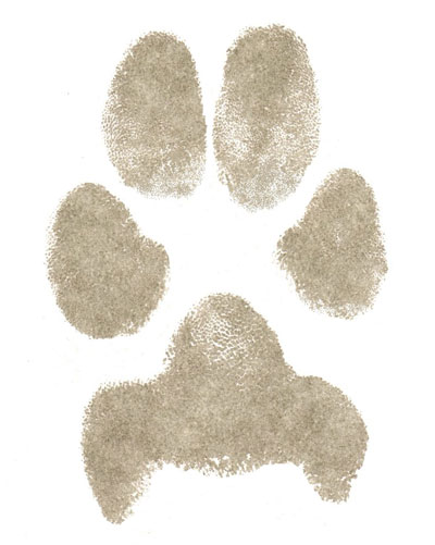 Paper paw print from dog digitally cleaned