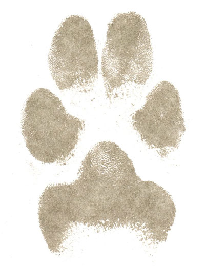 Paper paw print from dog