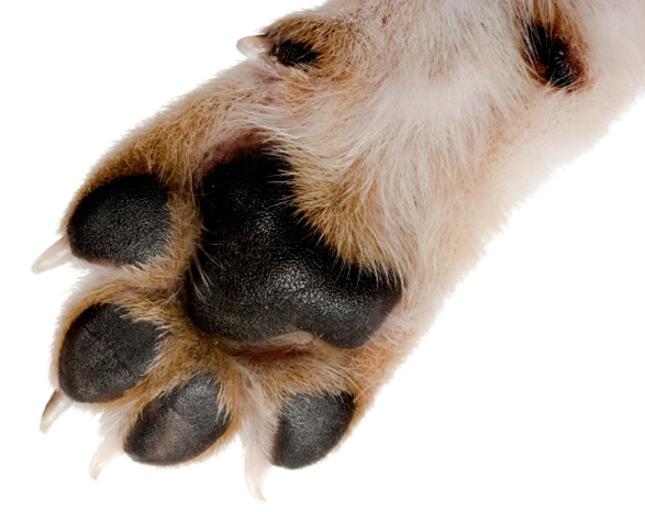 picture of paw