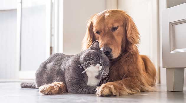 Cat and Dog cuddled together