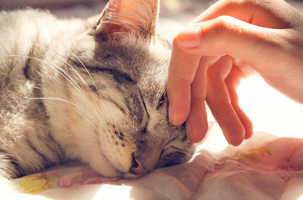 The Pet Funeral Sector – Is There Humanity Behind Closed Doors?