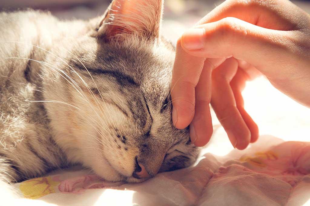 Humanity in Pet Funerals