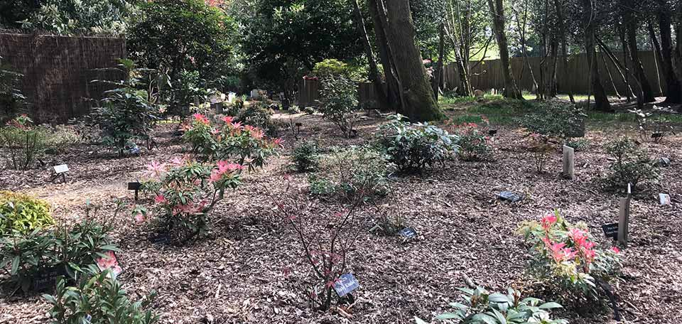green burial area of london pet cemetery