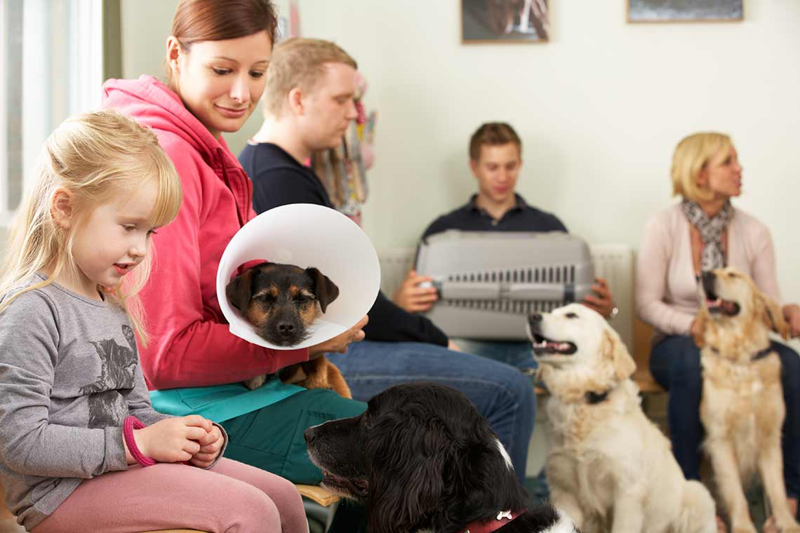 veterinary surgery with pets in waiting room